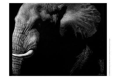 Wildlife Scratchboards III-Julie Chapman-Art Print