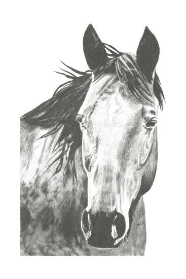 Wildlife Snapshot: Horse I-Naomi McCavitt-Art Print