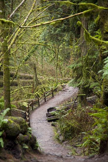 Wildwood Trail In Forest Park. Portland, Oregon-Justin Bailie-Photographic Print