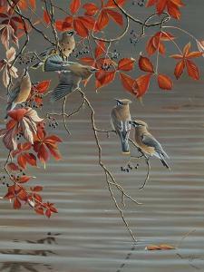 Autumn Harvest - Cedar Waxwing by Wilhelm Goebel