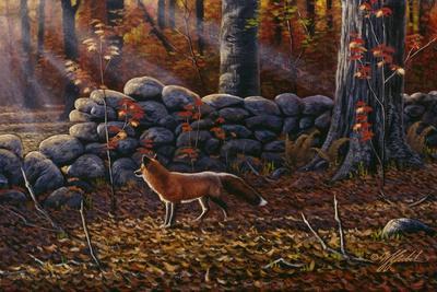 Autumn Reds - Red Fox