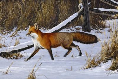 Fox Trot - Red Fox by Wilhelm Goebel
