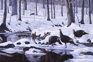 Hardwood Creek - Wild Turkeys by Wilhelm Goebel