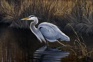 Making Strides - Great Blue Heron by Wilhelm Goebel