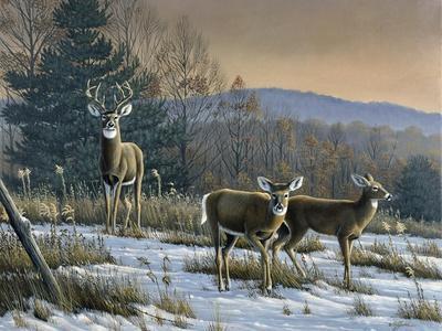 Prime Time - Whitetail Deer