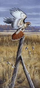 The Corner Post - Red Tailed Hawk by Wilhelm Goebel