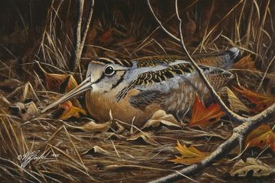 Woodcock in Hiding