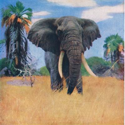 African Elephant in His Native Haunts