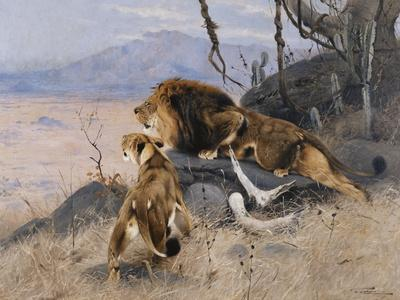 Lion and Lioness; Lowe Und Lowin