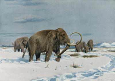 Mammoth Herd During the Ice Age