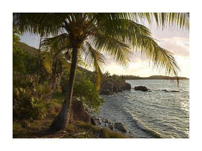 Wilkes Point at sunset with palm trees, Roatan Island, Honduras-Tim Fitzharris-Art Print