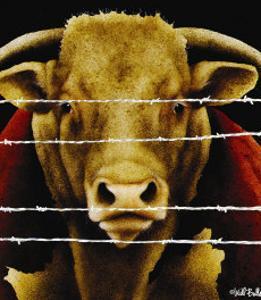Bunch of Bull by Will Bullas