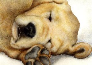 Nipper Nap by Will Bullas