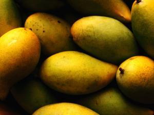 Nam Doc Mai Mangoes for Sale at Rapid Creek Market, Darwin, Australia by Will Salter