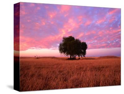 Sunset Over Lone Tree in Paddock, Rochester, Australia