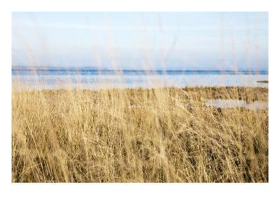 Willapa Meadow-Acer Images-Premium Photographic Print