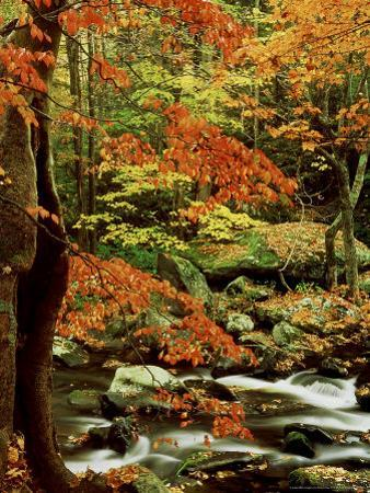 Fall Colour Along Middle Prong of Little River, USA