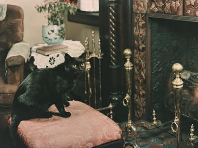 A Cat is Perched on an Ottoman in Front of a Fireplace by Willard Culver