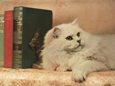A Cat Rests Near a Stack of Books