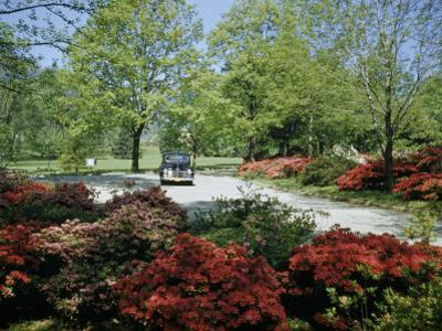 Car Travels Down Azalea-Lined Driveway of a Government Facility by Willard Culver