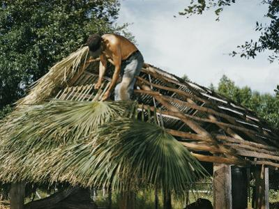 Seminole Indian Thatching a Chickee with Palm Fronds by Willard Culver