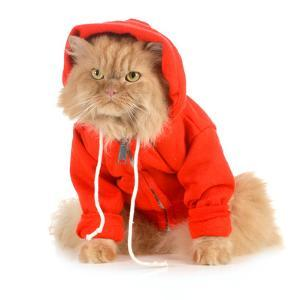 Cat Wearing Red Coat by Willee Cole