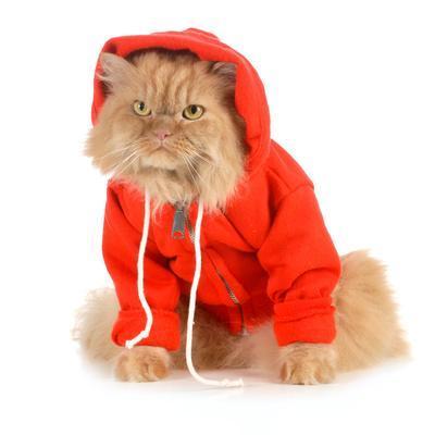 Cat Wearing Red Coat