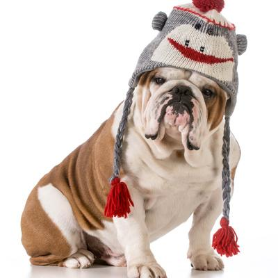 Dog Wearing Winter Hat