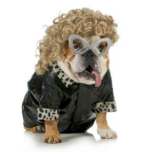 Female Dog - English Bulldog Wearing Blonde Wig and Black Leather Coat by Willee Cole