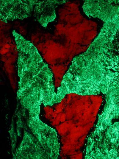 Willemite, Green, and Calcite, Red, Seen under Untraviolet Light-John Cancalosi-Photographic Print
