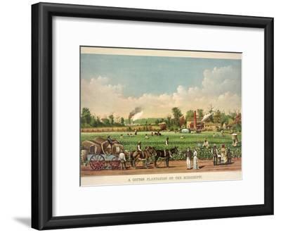A Cotton Plantation on the Mississippi, Pub. 1884