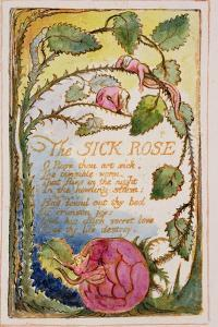 The Sick Rose: Plate 39 from Songs of Innocence and of Experience C.1815-26 by William Blake