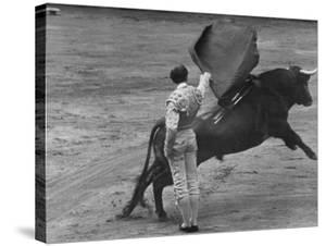 Bull Fighter Manolete Raising His Cape as Bull Charges Past Him in Bull Ring During Bull Fight by William C. Shrout