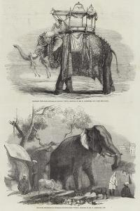 Indian Elephants by William Carpenter
