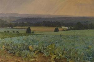Turnip Field by William Cosens Way