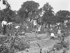 Children Working in the Isham Park School Garden, New York City, August 16, 1915 by William Davis Hassler
