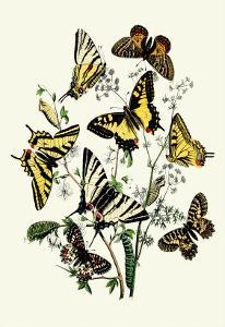 Butterflies: P. Podaliris, P. Alexanor by William Forsell Kirby