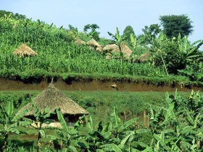 Banana Plantation and Traditional Mud & Thatch Huts, E. Uganda