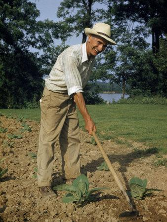 Farmer Hoes a Plot of Tobacco Planted Near Ohio River