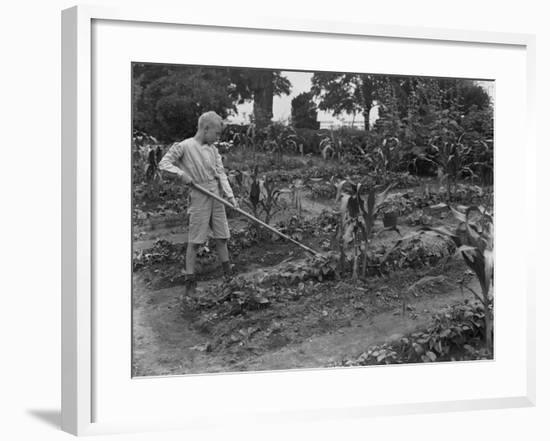 William Gray Hassler Working in the School Garden in Isham Park, New York City, August 5, 1914-William Davis Hassler-Framed Photographic Print
