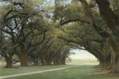 Alley of the Oaks