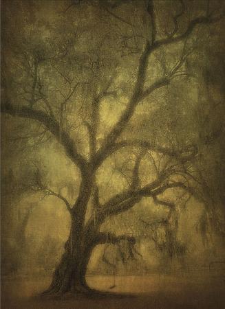 william-guion-avery-island-oaks-study-12