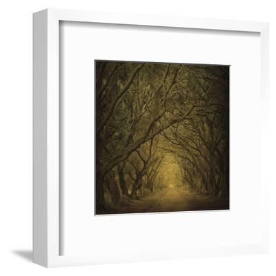 Evergreen Oak Alley (vertical view)