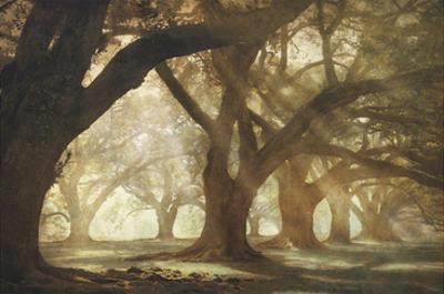 Oak Alley Morning Light by William Guion