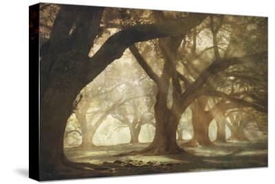 Oak Alley Morning Light