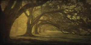 Oak Alley Morning Shadows by William Guion