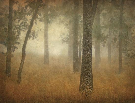 william-guion-oak-grove-in-fog-study-24