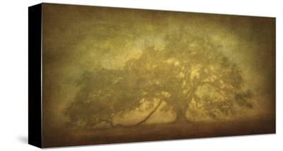 St. Joe Plantation Oak in Fog 3