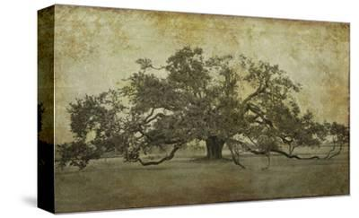 Sugarmill Oak, Louisiana
