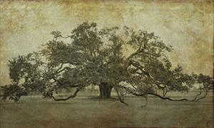 Sugarmill Oak, Louisiana by William Guion